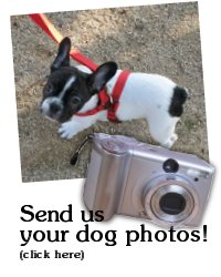 Send us your dogs on the trail photos!